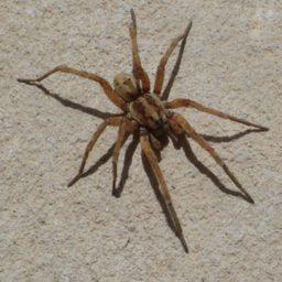 Уничтожение пауков в Магадане
